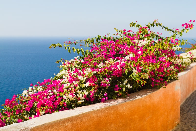 Santorini Oia Travel Guide Reccomendations Honeymoon Colourful Place Greece_-59