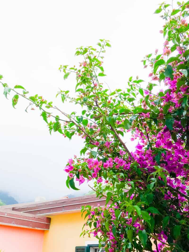 Cinque Terre Travel Guide Train Hiking Italy Information Advice Reccomendation Colourful_-11