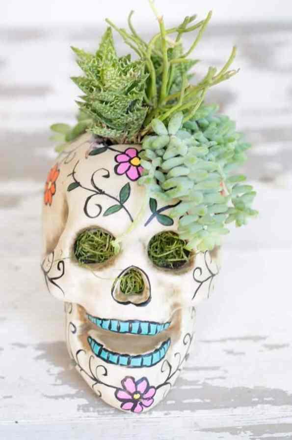 halloweenskullplanter-2