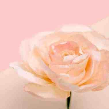 best-paper-flower-tutorials-for-your-wedding-paper-garden-rose-bespoke-bride-wedding-blog