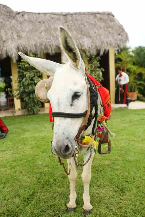 colorful-vibrant-destination-wedding-in-mexico-23