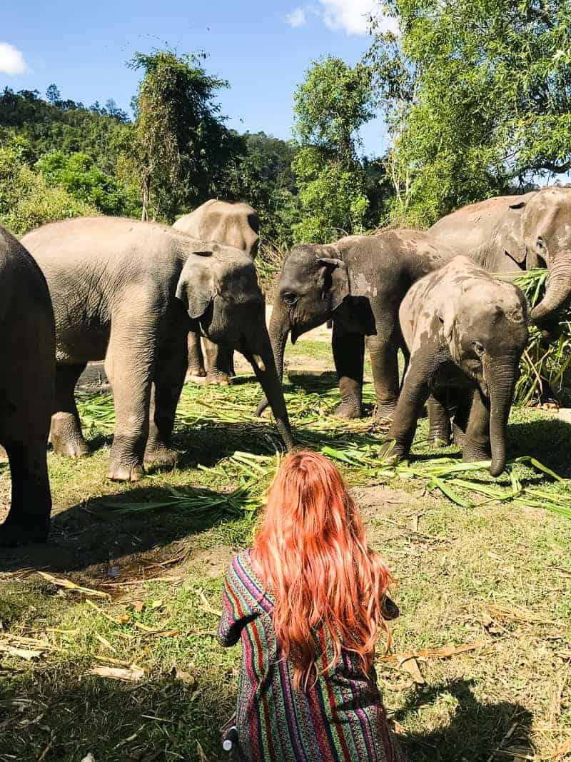 Elephant Jungle Santuary Chang Mai Thailand Ethical Sustainable Eco-Tourism Welfare-43