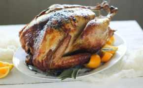 Epic duck fat thanksgiving turkey recipe
