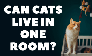 Can Cats Live in One Room?
