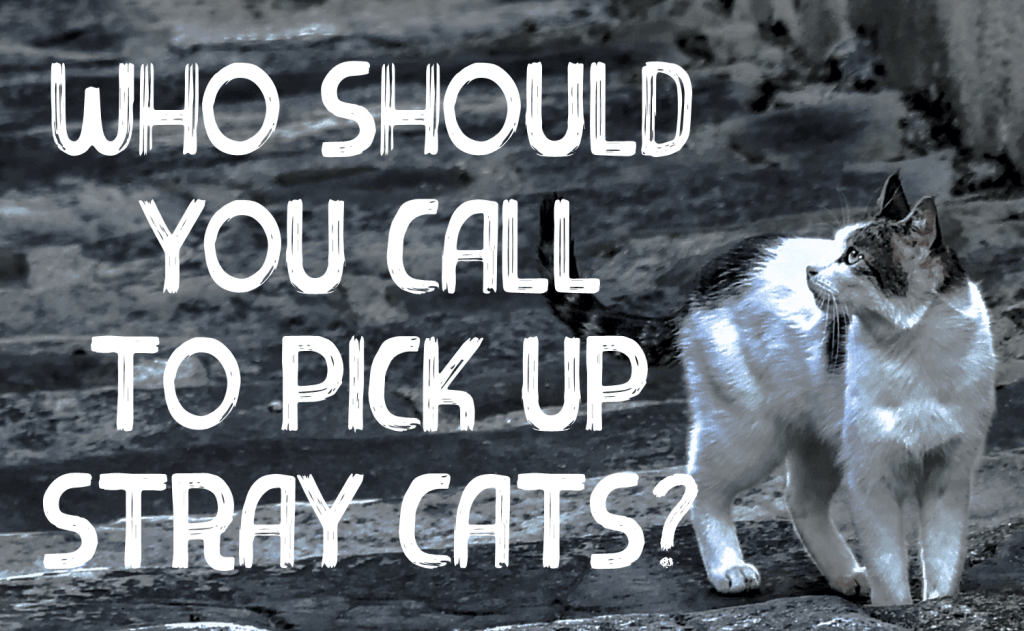 Who Should You Call To Pick Up Stray Cats?