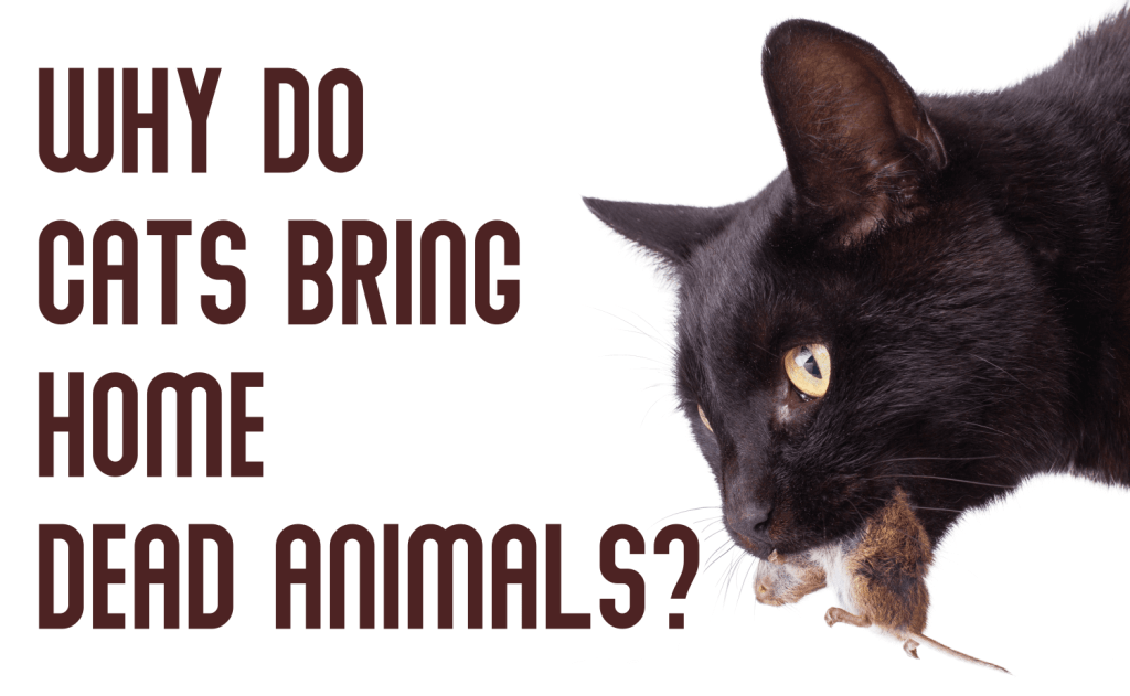 Why Do Cats Bring Home Dead Animals?