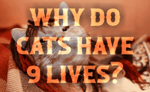 Why Do Cats Have 9 Lives?