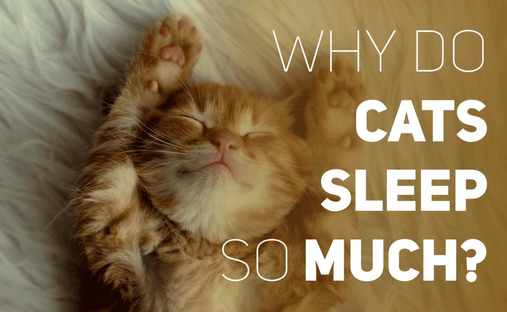 Why Do Cats Sleep So Much?