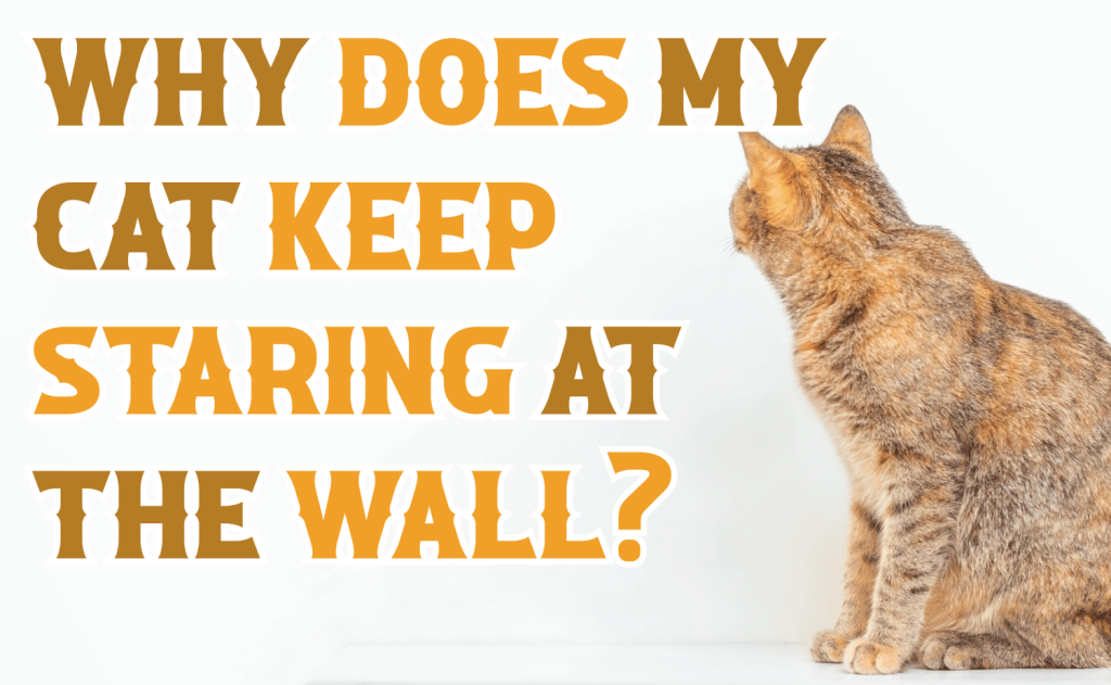Why Does My Cat Keep Staring at the Wall?