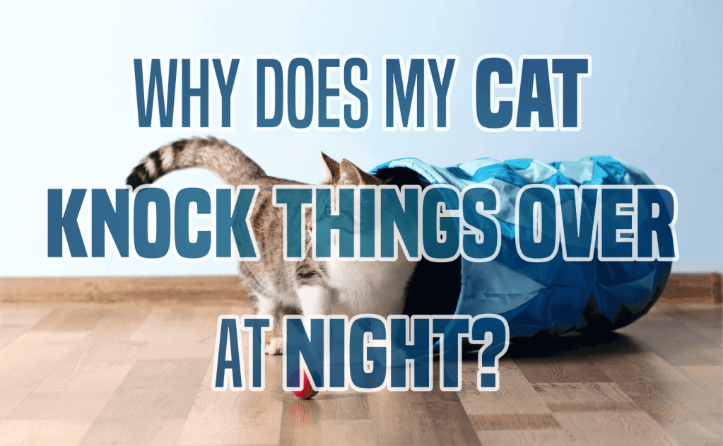 Why Does My Cat Knock Things Over At Night?