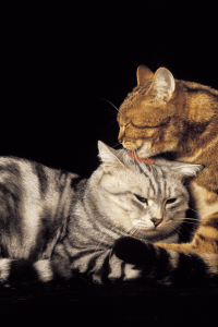 Why Do Cats Groom Each Other?