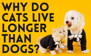 Why Do Cats Live Longer Than Dogs?