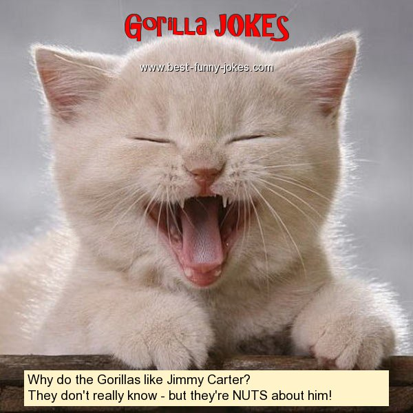 Gorilla Jokes Why Do The Gorillas