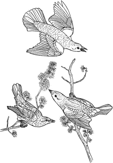 bird-coloring-pages-for-adults-printable