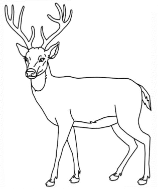 big-deer-coloring-pages