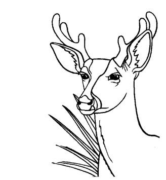 coloring-page-deer