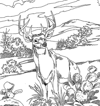 coloring-pages-animals-deer