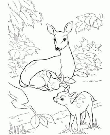 coloring-pages-of-deer