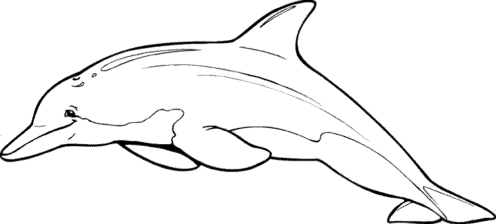 Free Printable Miami Dolphins Coloring Pages