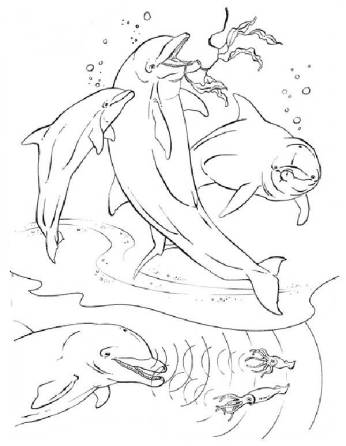 real-dolphin-coloring-pages