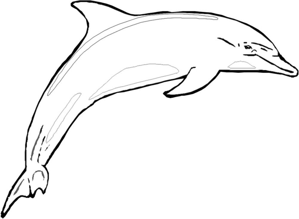 Winter The Dolphin Coloring Pages