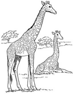 coloring-page-of-a-giraffe