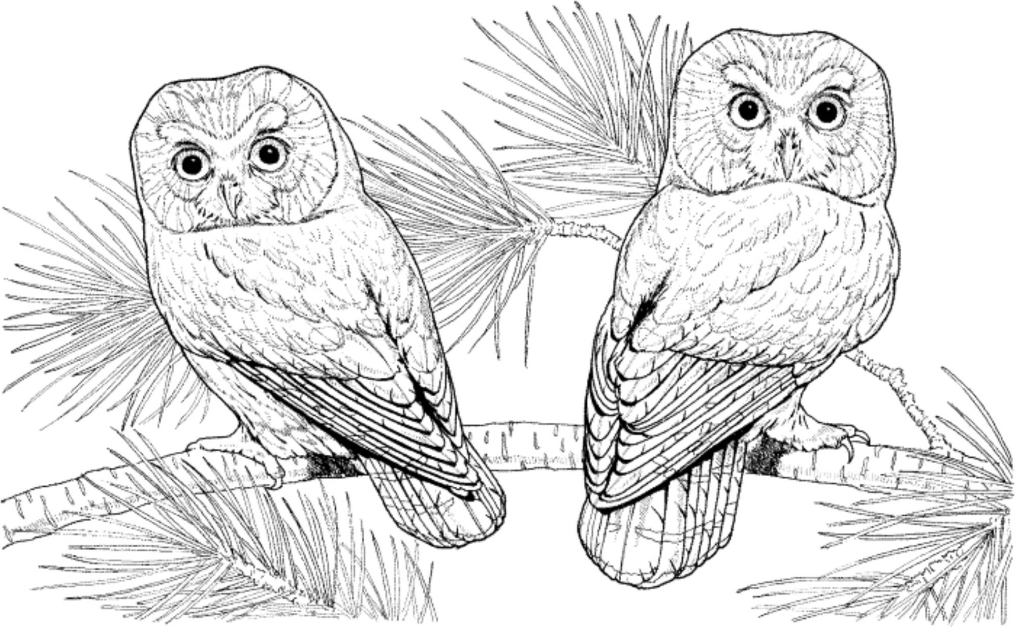 Difficult Owl Coloring Pages Bestappsforkids Com