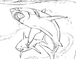 free-coloring-pages-for-boys-shark