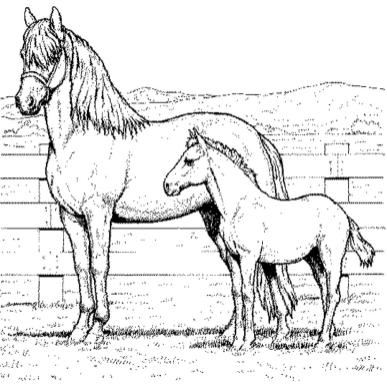 free-coloring-pages-horses