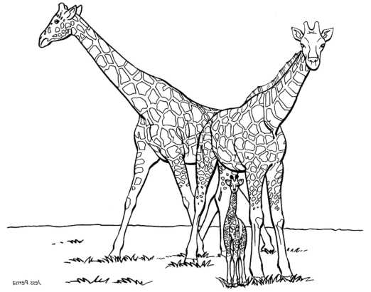 giraffe-color-pages