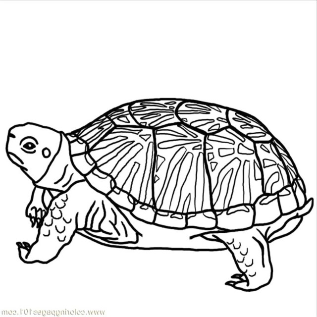hard-turtle-coloring-pages-printable   BestAppsForKids.com