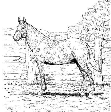 printable-coloring-pages-horses