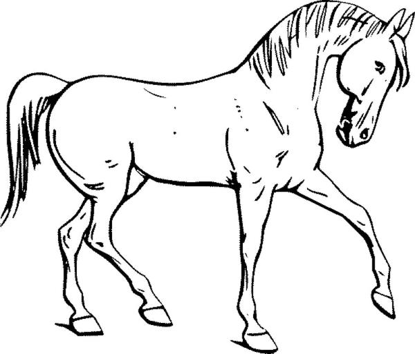 horse coloring pages # 18