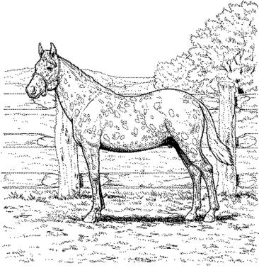 realistic-horse-coloring-pages