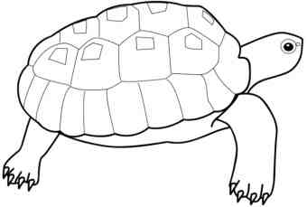 turtle-coloring-pages-for-kids