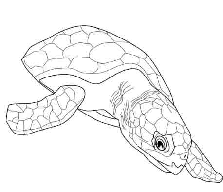 turtles-coloring-pages-for-adults