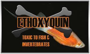 Etoxiquina, un veneno presente en algunos de nuestros pescados de cada día