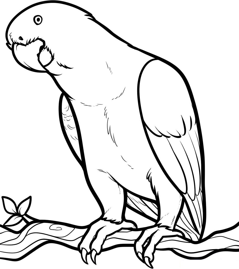 - Rainforest Birds Coloring Pages