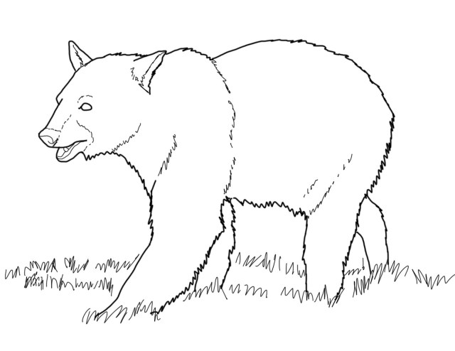 Free Printable Bear Coloring Pages For Kids