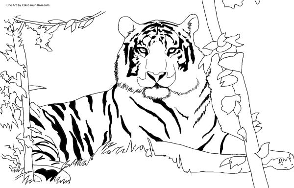coloring pages of tigers # 5