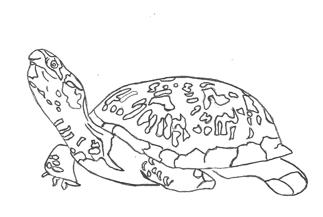 Funny Turtle Coloring Page Coloring Pages
