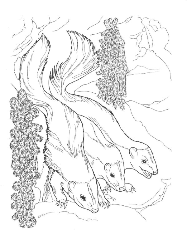 skunk coloring pages # 2
