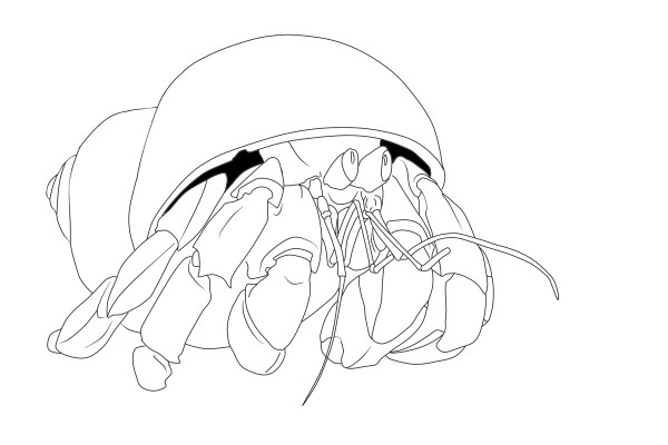 hermit crab coloring page # 10