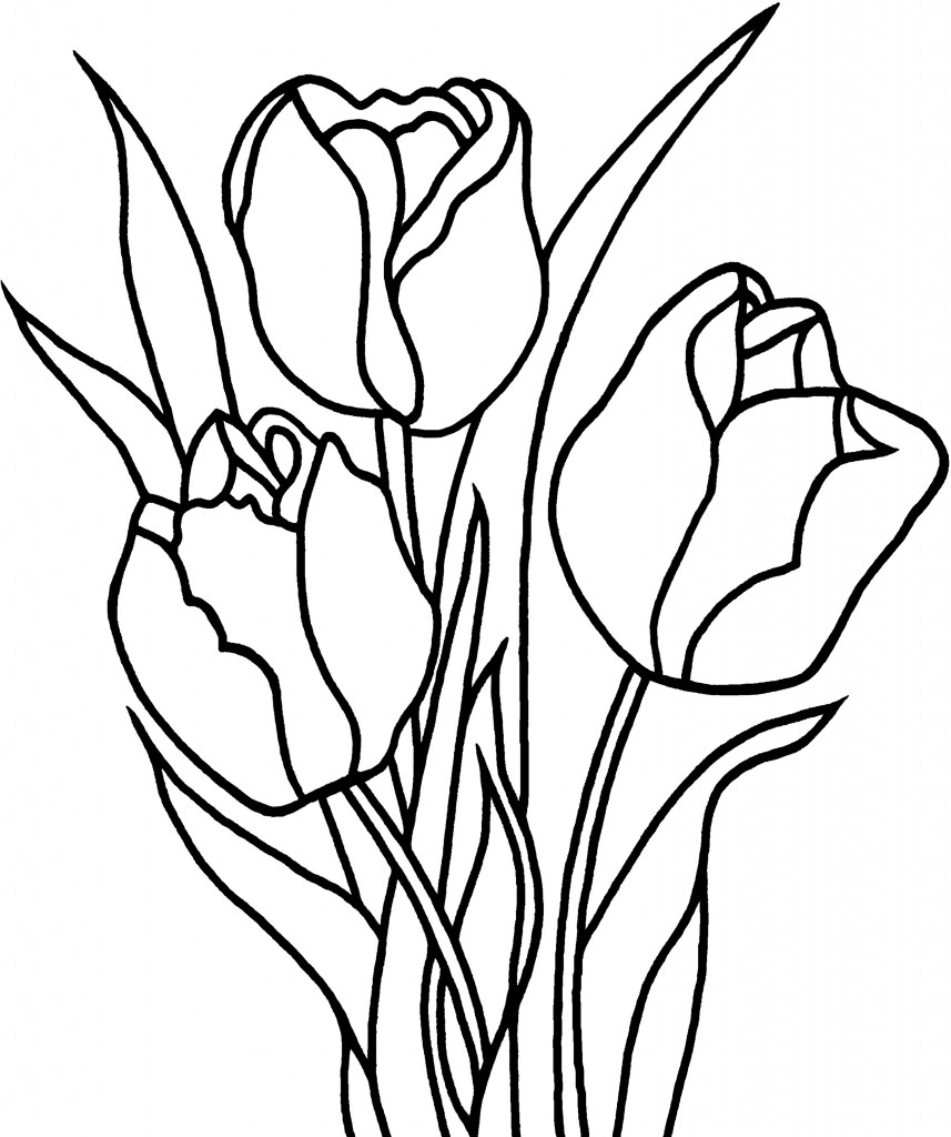 Tulip Coloring Pages Printable Murderthestout