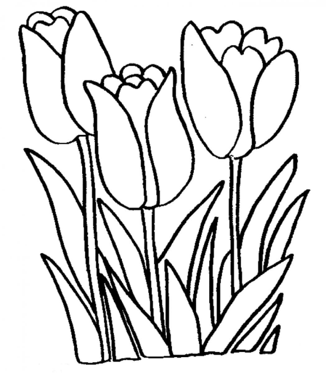 Free Printable Tulip Coloring Pages For Kids | colouring pages tulip flowers