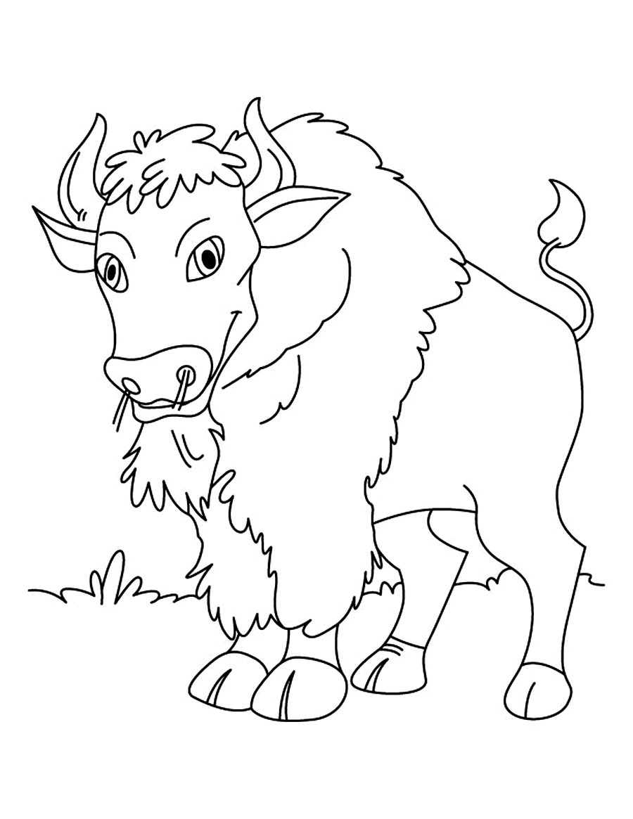 Free Printable Bison Coloring Pages For Kids   free coloring pages for toddlers