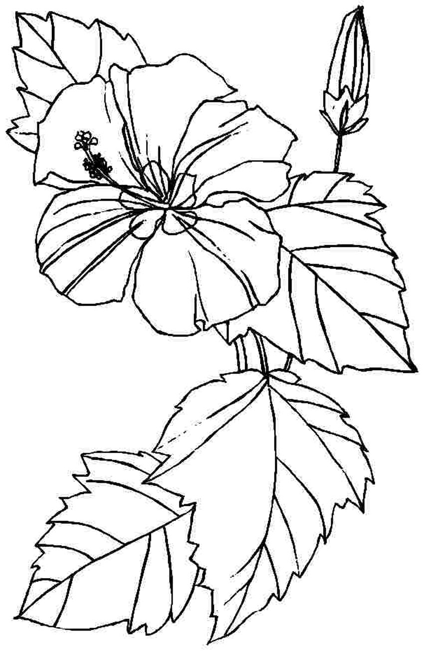 Free Printable Hibiscus Coloring Pages For Kids | flower coloring pages printable
