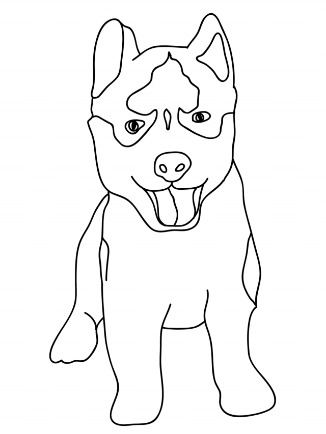 husky coloring pages best for kids - Husky Coloring Pages