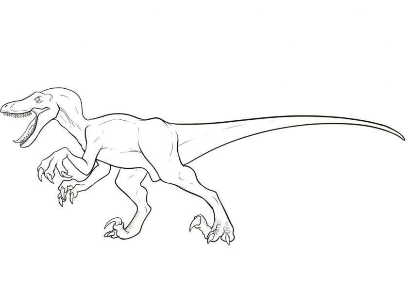 velociraptor coloring pages  best coloring pages for kids