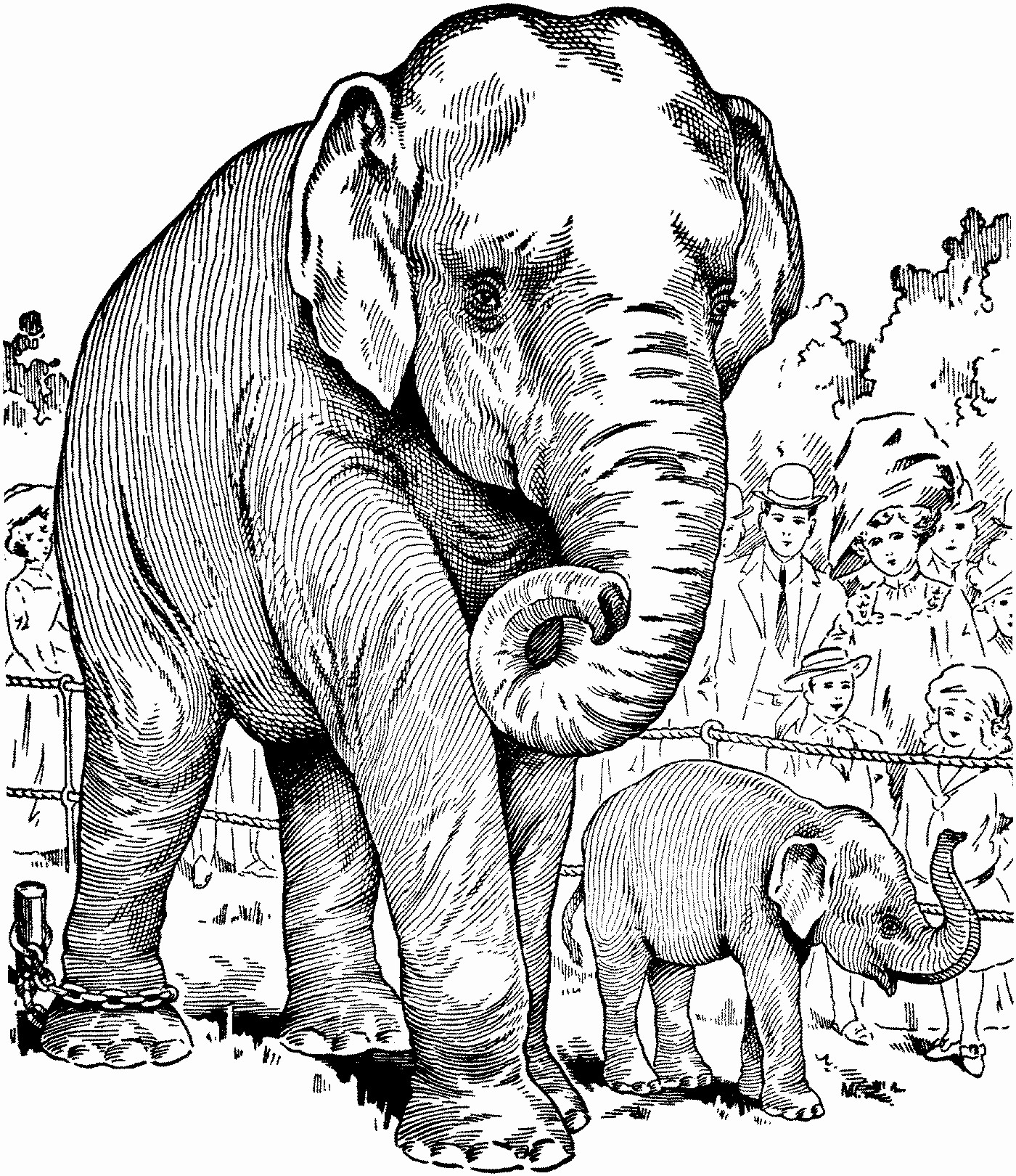 Elephant Coloring Pages for Adults - Best Coloring Pages ...   free coloring pages animals realistic